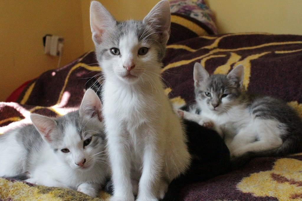 macska etetése, mit szabad adnod egy cicának és mit tilos