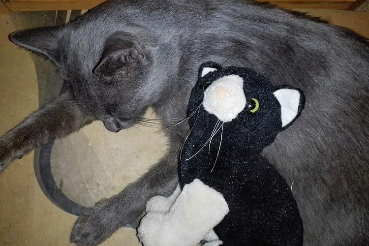 cicacsalad, cicacsalád, macska, cica