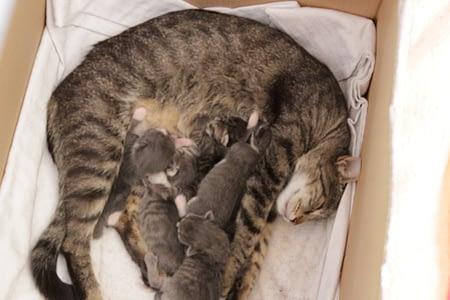 cicacsalád, cicacsalad, cica, macska, cicák, macska élet, macska család, macska egészség