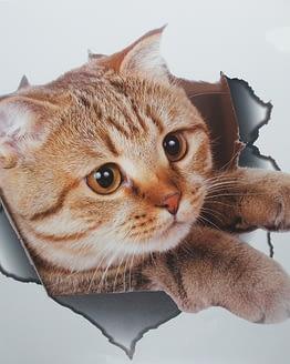 cicás falmatrica, macskás ajándék