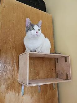cica boldogság, macska egészség, cica játék, macska, cica